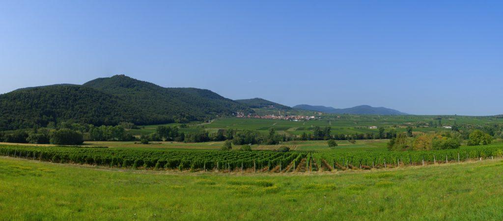 panorama vignes
